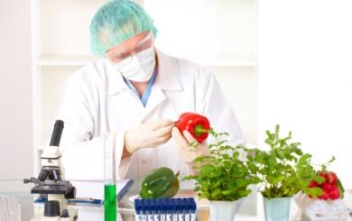 Sertifikasi HACCP